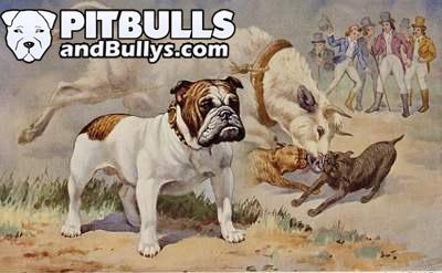 Perros tipos Bull Breed en el Bullbating