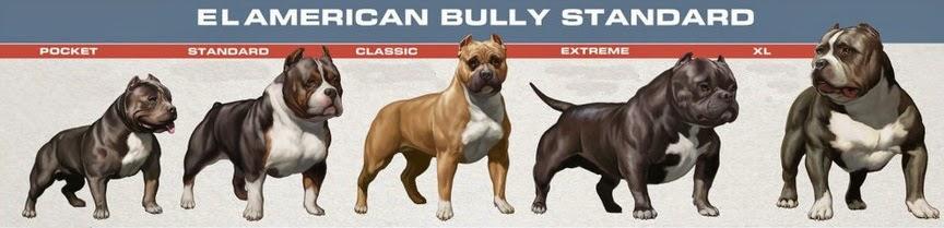 Tipos de American Bully, ABKC