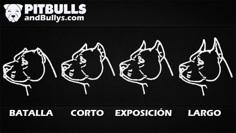 Estilos y tipos de corte de orejas para perros pitbull